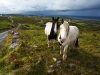 horses-along-road-carrownacleary-ie-10-04-12_0652-l